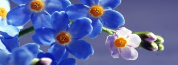 Blue Flowers Hd Facebook Banner