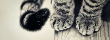 Cat Paws Facebook Background