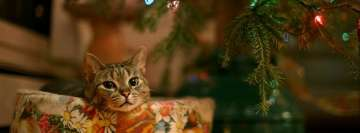 Christmas Cat Facebook Background TimeLine Cover