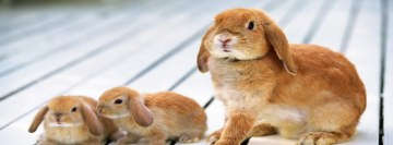 Easter Bunnies Rabbits Facebook Cover