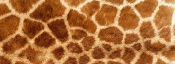 Giraffe Skin Facebook Cover