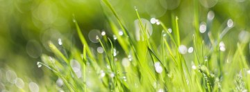 Morning Dew with Bokeh Facebook Cover
