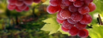 Table Grapes Facebook Cover