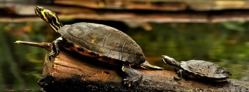 Turtles Facebook Cover