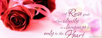 A Rose Speaks of Love Silently Facebook cover photo