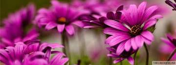 Amazing Little Purple Flowers Facebook Cover