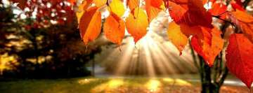 Autumn Leaves in Sunset Facebook Background TimeLine Cover