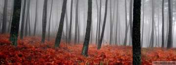 Autumn Misty Forest Facebook cover photo
