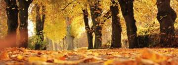 Autumn Park Leaves Falling Facebook Cover-ups