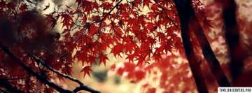 Autumn Tree Red Leaves Facebook Cover