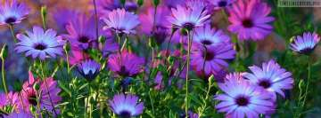 Awesome Purple Flowers Facebook Cover