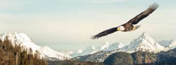 Bald Eagle Bird of Prey Facebook Background
