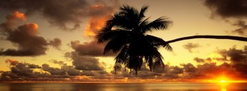 Beach Palm Tree Facebook Cover