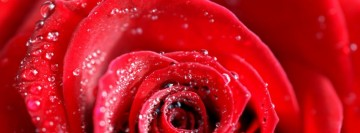 Beautiful Red Rose Facebook cover photo