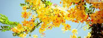 Beautiful Yellow Spring Flowers Facebook Cover