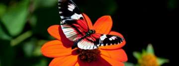 Black White and Red Butterfly on an Orange Flower Fb Cover