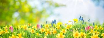 Blooming Spring Daffodil Yellow Flower Facebook Background TimeLine Cover