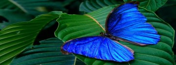 Blue Butterfly Facebook Wall Image