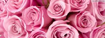 Bright Pink Roses Facebook Cover