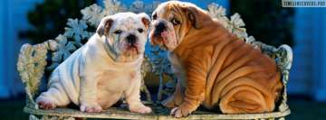Bulldog Puppy Dogs Fb Cover