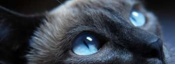 Cat Eyes Facebook Wall Image