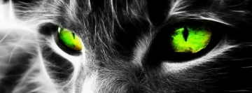 Cat Green Eyes Facebook cover photo