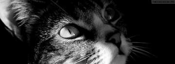Cat Listening Facebook cover photo