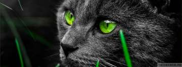 Cat with Green Eyes Facebook Cover-ups