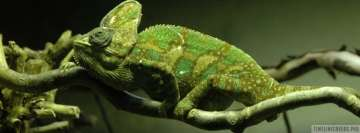 Chameleon in Green Facebook Banner