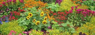 Colorful Flower Garden Facebook Wall Image