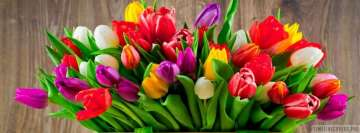 Colorful Tulip Flowers Fb Cover