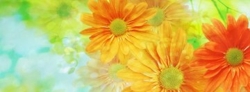 Colorful Flowers Facebook Banner
