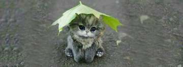 Cute Little Cat in The Rain Facebook Cover