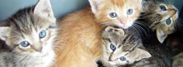 Cute Baby Kittens Facebook Cover Photo