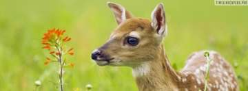 Cute Deer in Green Grass Facebook Wall Image