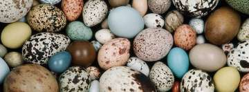 Diversity of Eggs Facebook Cover Photo