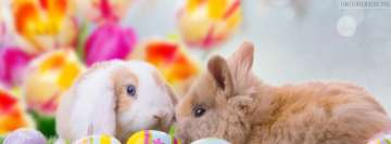 Easter Bunnies Looking Around Facebook Cover Photo