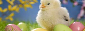Easter Chick Facebook cover photo