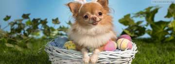 Easter Chihuahua Facebook Cover
