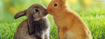 Easter Rabbit Kisses Fb Cover