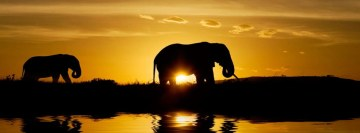 Elephant Safari Sunset Facebook Cover