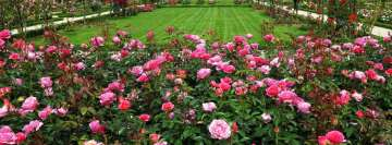 English Rose Garden Facebook Cover Photo