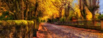 Fall Yellow Leaves Hdr Facebook Cover Photo