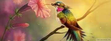 Fantasy Hummingbird Facebook Wall Image