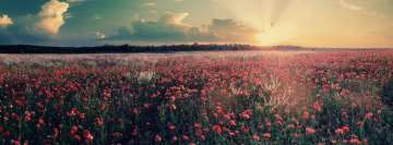 Field of Poppy Flowers Facebook Wall Image