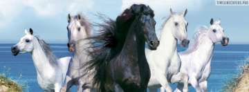 Five Beautiful Horses Facebook Wall Image