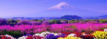 Flowers Near Mt Fuji in Japan