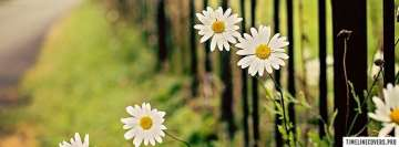 Flowers Chamomile Fence Fb Cover
