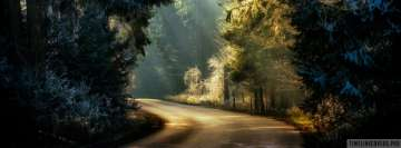 Forest Road in Dimming Sunlight Facebook Cover Photo