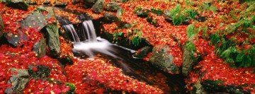 Forest with red leaves Facebook cover photo